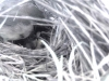 Junco Young